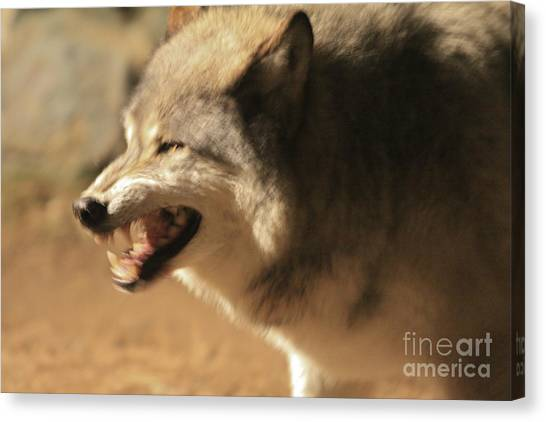 Wolf Power Canvas Print
