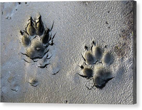 Arctic Wolf Canvas Print - Wolf Tracks In The Brooks Range Gates by Scott Dickerson / Design Pics