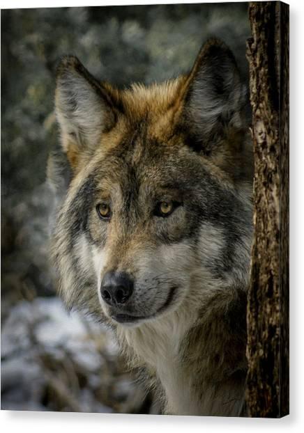 Wolf Upclose 2 Canvas Print