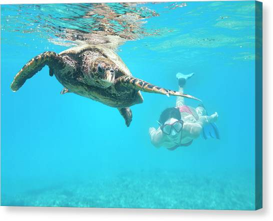 Woman Diving With A Hawksbill Sea Canvas Print by 4fr