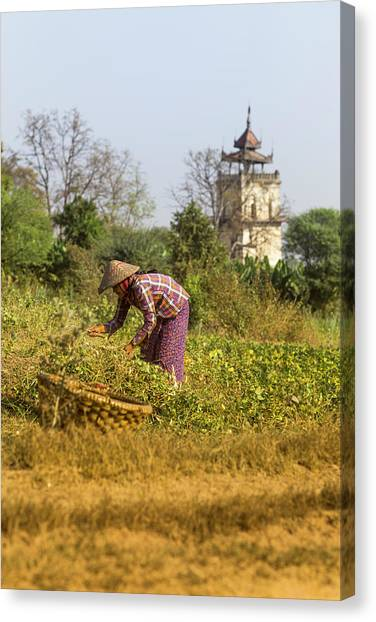 Woman Weeding At Nanmyin Tower Canvas Print
