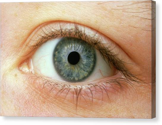 Woman's Right Eye Canvas Print by Martin Dohrn/science Photo Library
