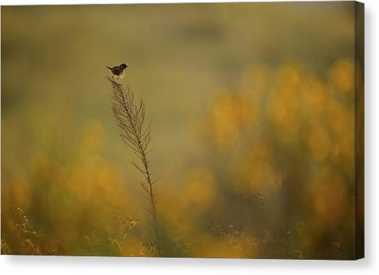 Small Birds Canvas Print - Wonder Land by Assaf Gavra