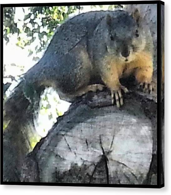 Squirrels Canvas Print - Wondering Where The Handout Is by Kevin Previtali