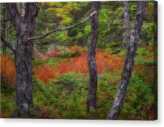 Jordan Canvas Print - Wonderland by Darylann Leonard Photography