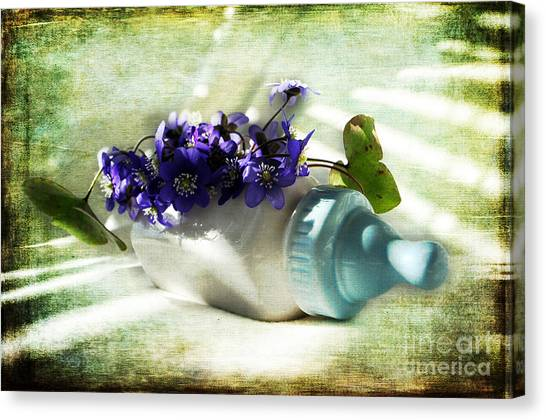 Wonders Happen In The Spring Canvas Print