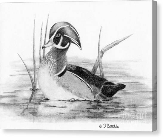 Wood Duck Canvas Print - Wood Duck In Pond by Sarah Batalka