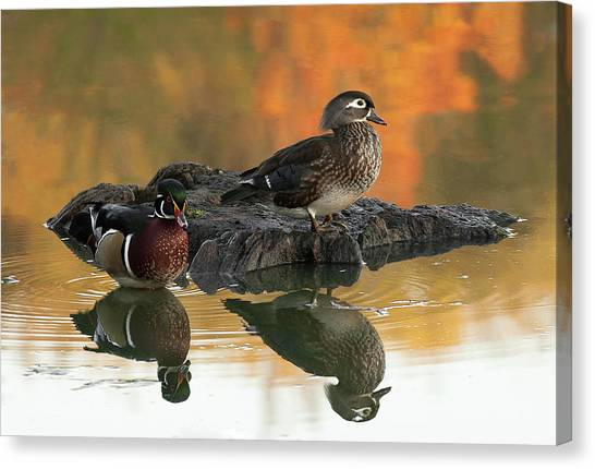 Wood Ducks Canvas Print