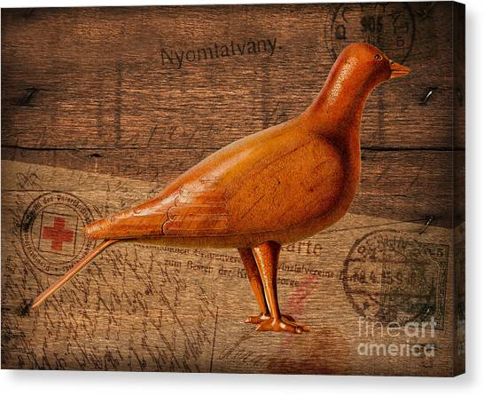 Wood Postal Pigeon Canvas Print