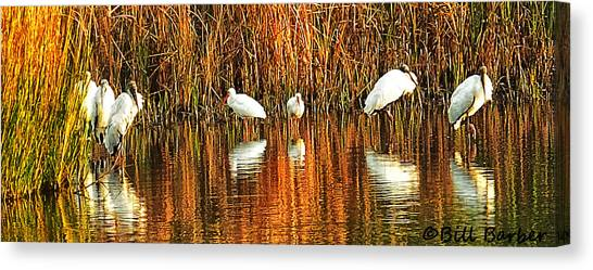 Wood Storks And 2 Ibis Canvas Print