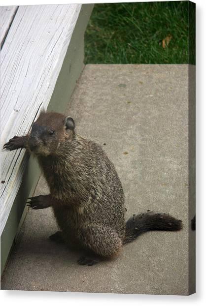 Groundhogs Canvas Print - Woodchuck by Bonnie Sue Rauch