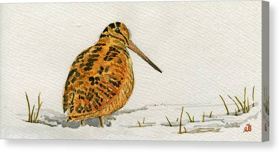 Woodcock Canvas Print - Woodcock Bird by Juan  Bosco