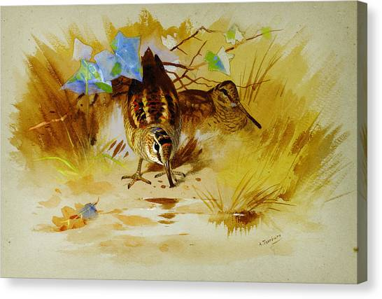 Woodcock Canvas Print - Woodcock In A Sandy Hollow by Celestial Images