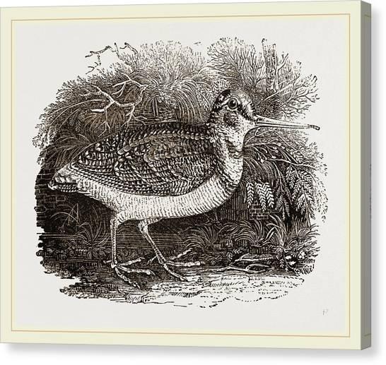 Woodcocks Canvas Print - Woodcock by Litz Collection