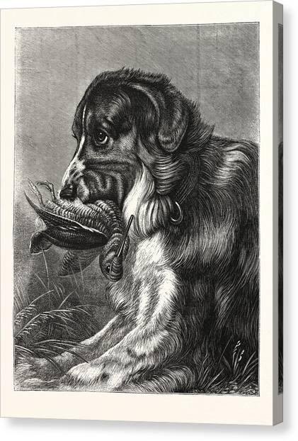 Woodcocks Canvas Print - Woodcock-shooting, Hunt, Hunting, Dog by English School