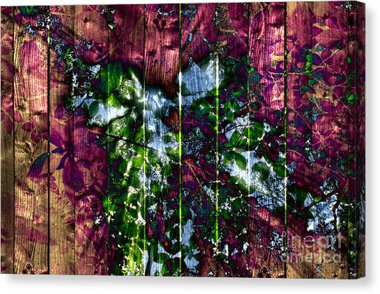 Wooden Planks And Sunlight Streaming Through Leaves II Canvas Print