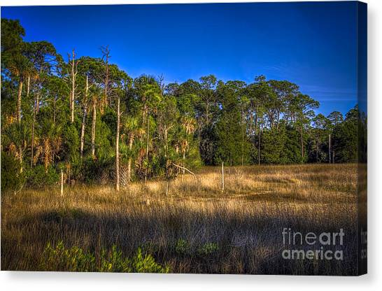 Marsh Grass Canvas Print - Woodland And Marsh by Marvin Spates