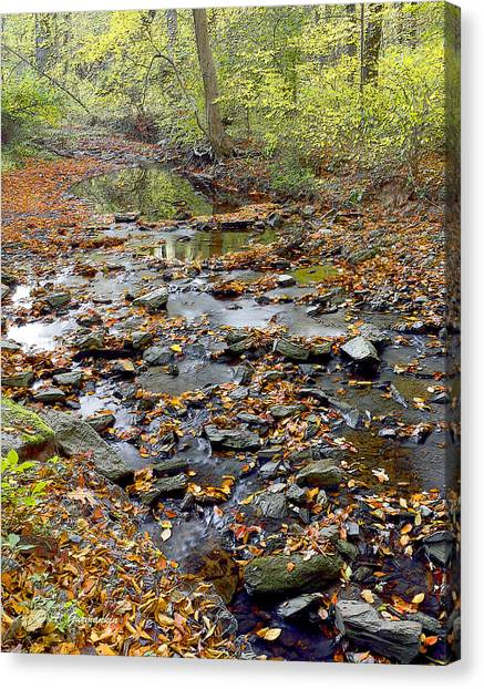 Woodland Brook In Fall Montgomery County Pennsylvania Canvas Print