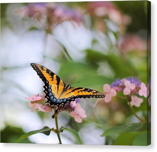 Woodland Butterfly Canvas Print