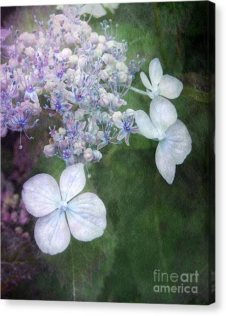 Woodland Hydrangea In Blue Canvas Print