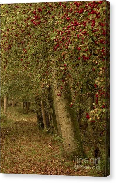 Woodland In Autumn Canvas Print