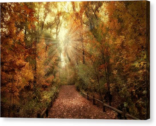 Woodland Light Canvas Print
