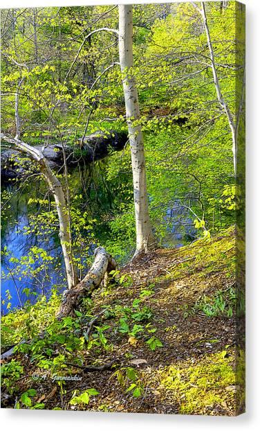 Woodland Stream In Spring Canvas Print by A Gurmankin