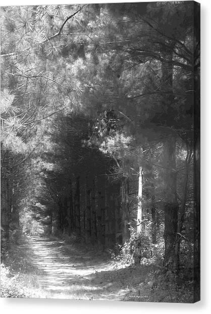 Woodland Tunnel Canvas Print