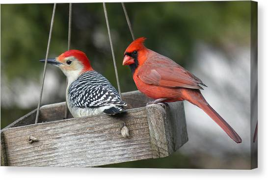 Woodpecker And Cardinal Canvas Print by John Kunze