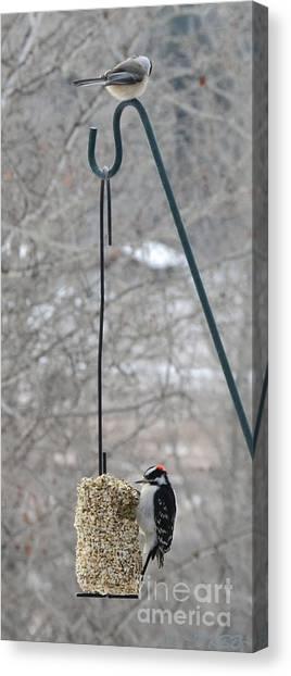Woodpecker And Chickadee Canvas Print