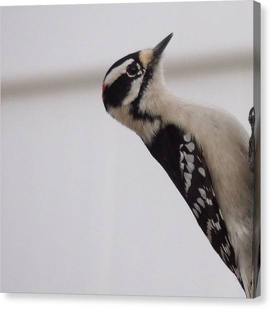 Woodpeckers Canvas Print - #woodpecker #birds #birdsofinstagram by Robb Needham