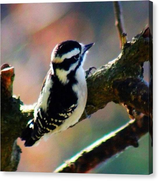 Woodpeckers Canvas Print - Woodpecker #woodpecker #bird #wildlife by Lisa Thomas