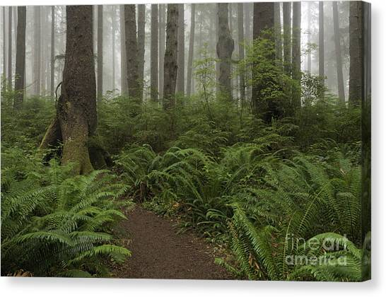 Woods Trail Canvas Print
