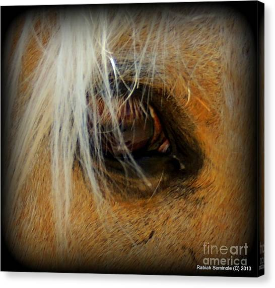Woodys View Canvas Print