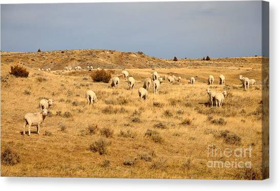 Wool You Sheep With Me Canvas Print