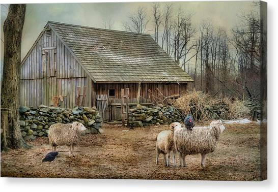 Chicken Farms Canvas Print - Wooly Bully by Robin-Lee Vieira