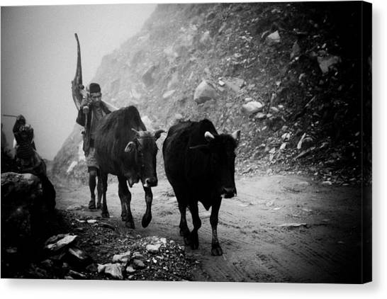 Work Hard Tamang People Langtang Nepal Canvas Print