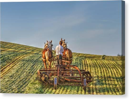 Work Horses Canvas Print by Deborah Penland