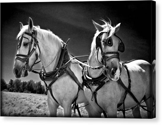 Canvas Print featuring the photograph Workhorses by Williams-Cairns Photography LLC