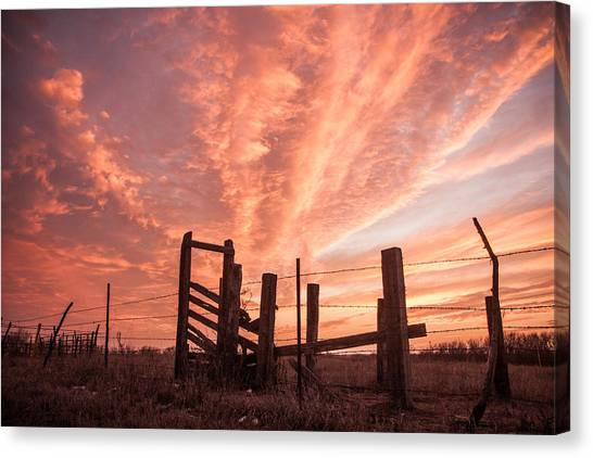 Working Cattle/ End Of Day Canvas Print