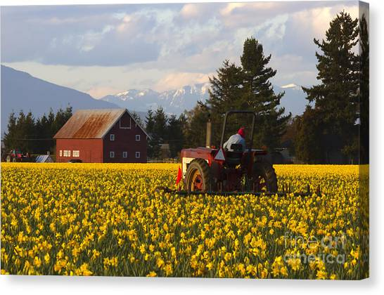 Tractors Canvas Print - Working Gold by Mike  Dawson