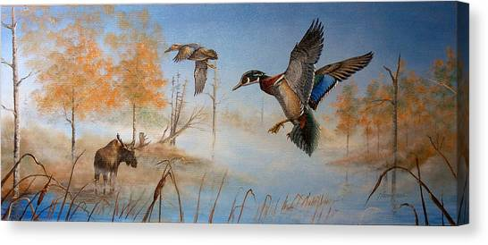 Would Duck Canvas Print by Whitey Thompson