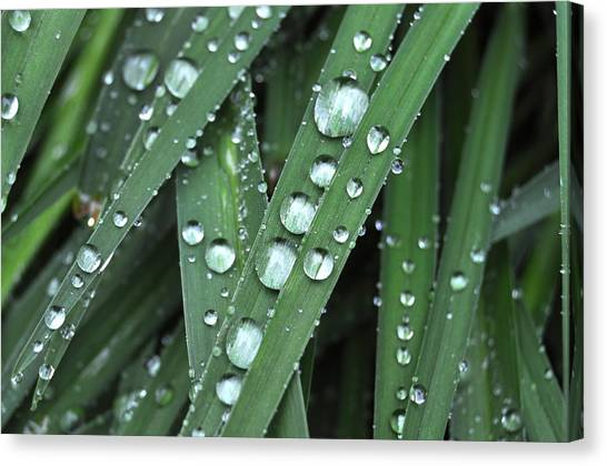 Wow Look At Those Droplets Canvas Print