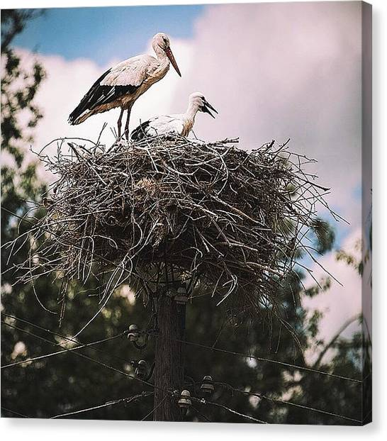 Storks Canvas Print - Wow, Storks Really Do Deliver Babies - by David  Hagerman