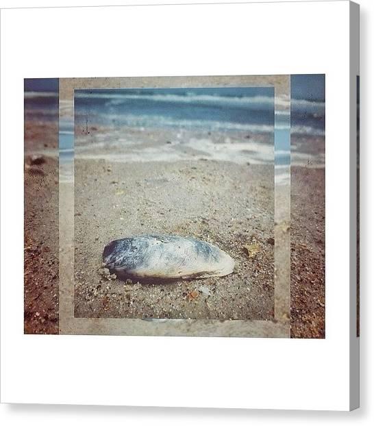 Seashells Canvas Print - Wow Very Art Wow #beach #sand #ocean by Bailey Moore
