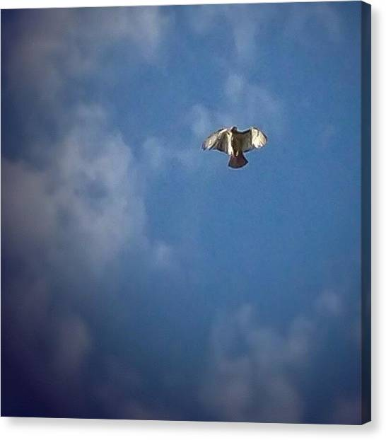 Hawks Canvas Print - Wow...i Just Saw Some Straight Up by Jessica Frech