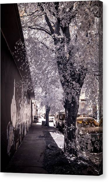 Wynwood Treet Shadow Canvas Print