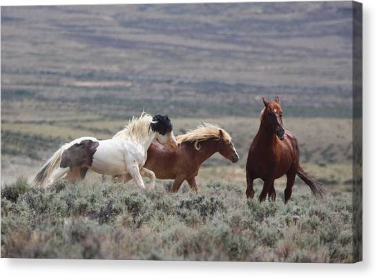 Wyoming Mustangs Canvas Print