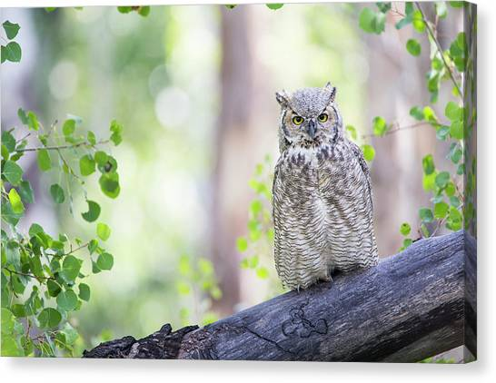 Teton National Forest Canvas Print - Wyoming, Sublette County, Great Horned by Elizabeth Boehm