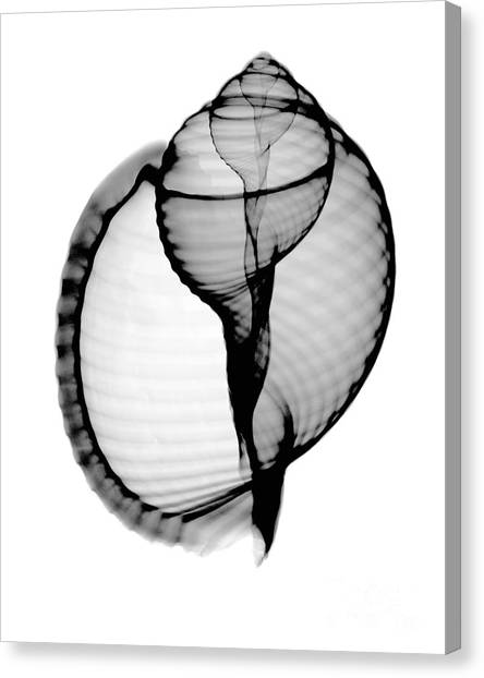 Scotch Canvas Print - X-ray Of Scotch Bonnet by Bert Myers